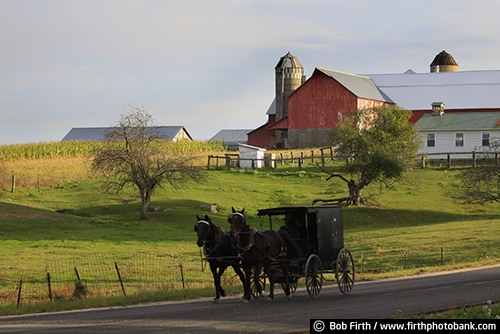 Wisconsin;WI;teamwork;team of horses;summer;road;red barn;one room schoolhouse;horse drawn carriage;homestead;home;field;farm;fall;country;corn;buggy;carriage;barn;Amish;agriculture;agricultural scene
