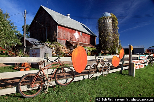 Barns;agriculture;country;farm;farm buildings;Minnesota;MN;Carver County MN;Waconia MN;fence;fencing;old bikes on fence;white fence;produce for sale;pumpkins;pumpkins for sale;red barn;silo;vine covered silo;silo with vines;fall;autumn;rural