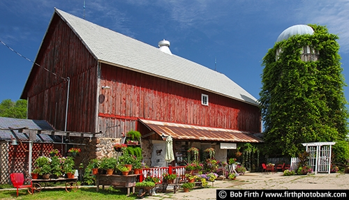 Barns;agriculture;country;farm;farm buildings;Minnesota;MN;Carver County MN;Waconia MN;silo;vine covered silo;silo with vines;plants;plants for sale;potted plants;red barn;summer;rural