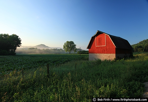 Barns;agriculture;country;farm;farm buildings;Wisconsin;WI;red barn;rural;fog;foggy;foggy morning;backroads;farm field;pasture;farmstead;plants;grasses;weeds;bluff country;river bluffs;summer;summer trees;midwest farm