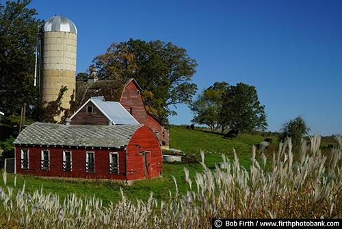 Barns;agriculture;country;farm;farm buildings;red barn;rural;summer trees;summer;grasses;silo;midwest farm;farmstead;farm field;Minnesota;MN