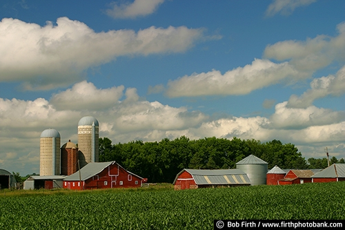 Barns;agriculture;country;farm;farm buildings;MN;Minnesota;rural;midwest farm;clouds;white puffy clouds;farm field;crops;farmstead;red barn;silo;silos;summer;summer trees