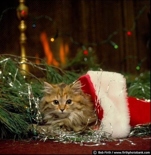cat;kitten;kitty;Christmas;fireplace;Christmas stocking;tinsel;feline;animal;pets;pet