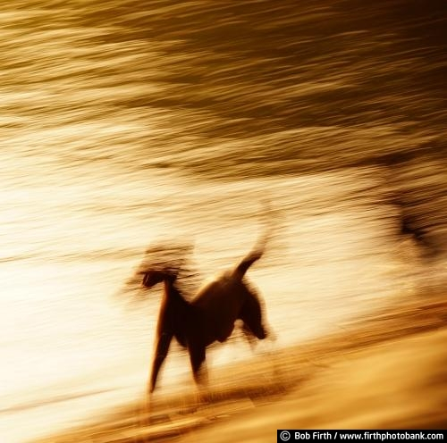 dog;active;canine;motion;blur;playful;puppy;outdoors;outside;abstract;sunset;lake;water;animal;pets;pet