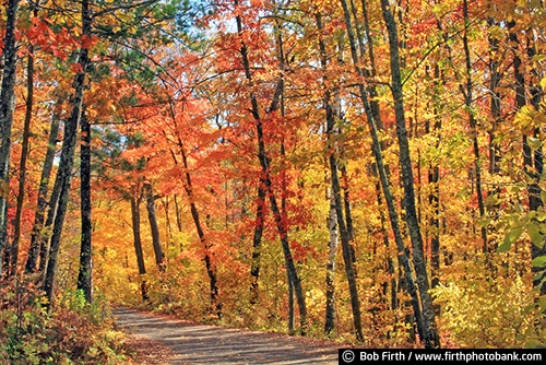 soccer;destination;fall color;Mississippi River Headwaters;MN;road;tourism;trees;up north;Minnesota;woodland;woods