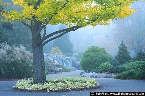 autumn;bench;Chaska Minnesota;gardens;grasses;landscaping;path;trees;University of Minnesota Landscape Arboretum;walkway;waterfall;evergreens;fall;fog;foggy;formal gardens