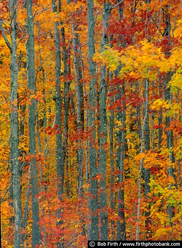 country;fall color;fall leaves;autumn;woods;woodlands;forest