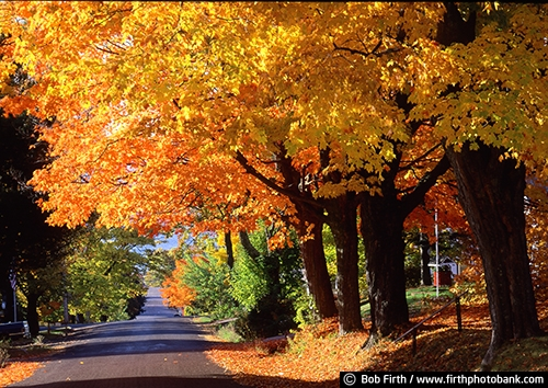 Wisconsin;backroads;Bayfield;fall;fall trees;road;fall color;street;maple trees;tree lined road